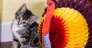 cuddly kittens meet up for a cat thanksgiving celebration