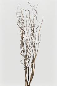 Branches In A Vase Choosing The Best Aquarium Driftwood Aquarium Info