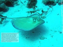 marinebio newsletter 3 marine biology sea creatures marine