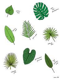 perennial plants garden ideas flower ideas