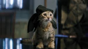 keanu u0027 kitten how a cat in a hat was trained to act for key and