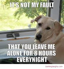 Hilarious Dog Memes - 13 menacing cute dog memes grumpy dog and more barking laughs