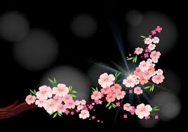 cherry blossom flowers cherry blossom flowers on branch vector premium