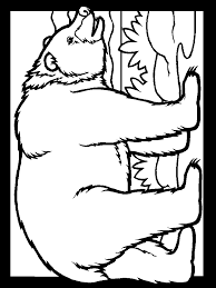 bears color bear animals coloring pages u0026 coloring book coloring