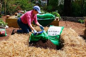 how to make a raised bed from bales of straw bonnie plants