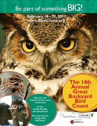 wild birds unlimited january 2011