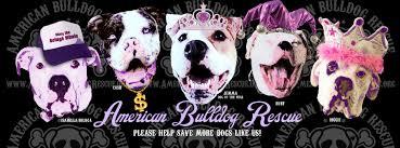 boxer dog rescue florida american bulldog rescue