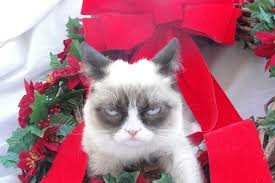 Grumpy Cat Memes Christmas - grumpy cat christmas hat wallpapers gallery