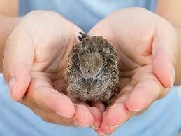 hola como puedo hacer unas alas de pato para nia de 4 cómo curar a un pájaro herido todo mascotas