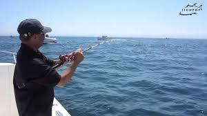 jignpop striped bass jigging off chatom in cape cod july 2013
