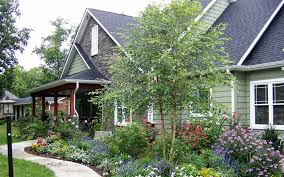 buy river birch tree for sale from wilson bros gardens