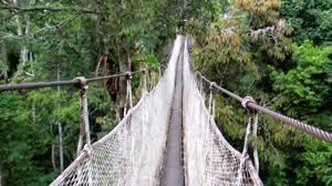 canopy amazon amazon rainforest canopy walkway youtube