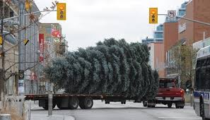 garbage collection kitchener curbside tree collection begins in cambridge kitchener