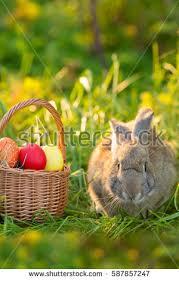 bunny basket eggs easter bunny basket eggs on stock photo 587857166