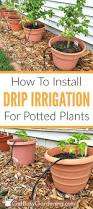 best 25 auto watering system ideas on pinterest automatic