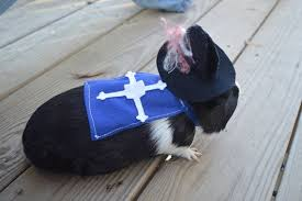 Musketeer Halloween Costume 15 Adorably Bookish Pet Costumes