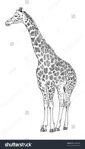 giraffe hand drawn sketch black ink stock illustration 85806094