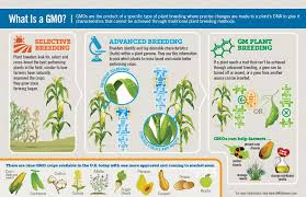 Types Of Plant Disease - current gmo crops gmo answers