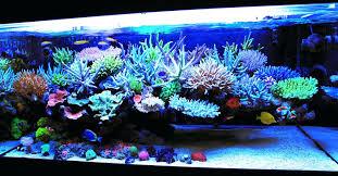 fish tank ornaments decoration ideas my decor living saltwater nurani