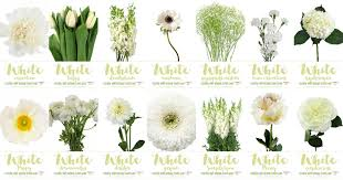 wedding flowers guide white wedding flowers guide types of white flowers names pics