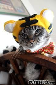 Baby Tiger Costumes Halloween Tiger Costume Dog Cat Elanor Wedman Cute U0026 Kawaiiiiii