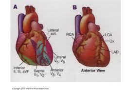 Heart Anatomy Arteries Coronary Arteries U0026 12 Leads