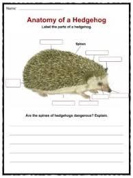 hedgehog facts u0026 worksheets kidskonnect
