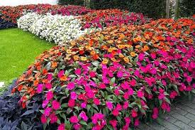 heat loving plants sun tolerant plants these sun loving heat tolerant plants bloom non