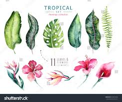 brazil native plants hand drawn watercolor tropical plants set stock illustration
