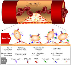 blood the growing complexity of platelet aggregation blood journal