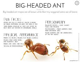 ant gallery