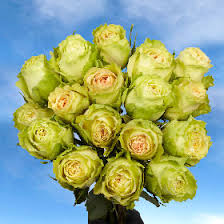 Global Roses Light Green Roses For Delivery Global Rose