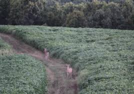 breakdown of materials wildlife farming