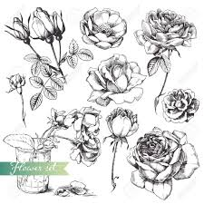 Draw A Flower Vase How To Draw A Rose In Pencil Draw A Realistic Rose Step By Step