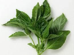 growing herbs the 10 best for a home garden reader u0027s digest
