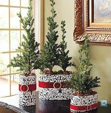 frontgate potted pine trees ideas holidays