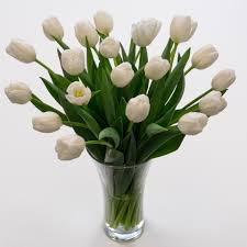 white tulips white tulips fresh flowers tulips