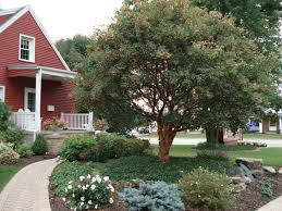Garden Tree Types - garden different kinds of maple trees paperbark maple maple