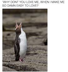 Penguin Memes - why dont you love me cheating penguin video know your meme