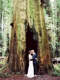 redwood forest wedding venue forest wedding venues california lake arrowhead wedding venues