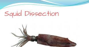 squiddissection pptx google slides