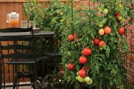grow your own food in the garden