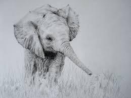 elephant drawings u2013 24 free printable jpeg png format download