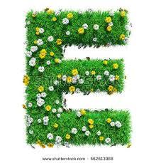 e flowers letter e green grass flowers isolated stock illustration 562613968