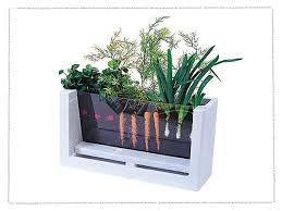Grow Vegetable Garden by Teach Your Kids How To Grow Vegetables