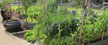 your patch organic gardening u0026 design service perth wa