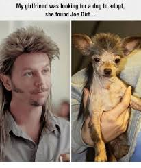 Dog Girlfriend Meme - my girlfriend was looking for a dog to adopt she found joe dirt