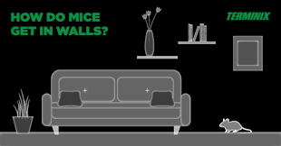 how to help get rid of mice in walls terminix