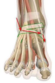 Top Foot Anatomy Pain Across Outer Ankle Top Of Foot Over To Arch