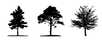 finally free tree graphics rachelforshee